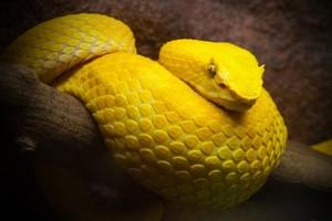 Укус змеи во сне