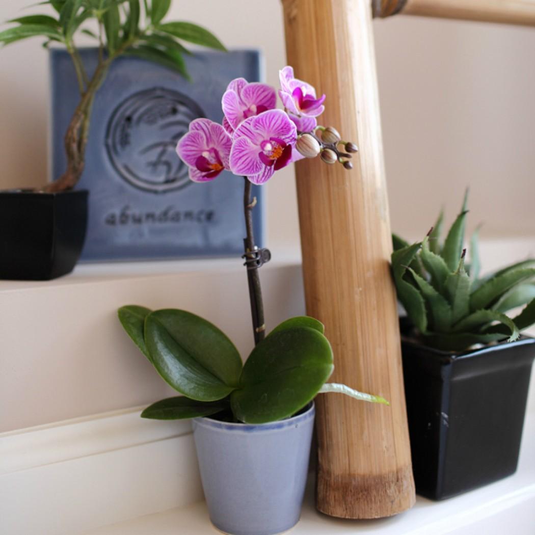 Уход за орхидеей в домашних